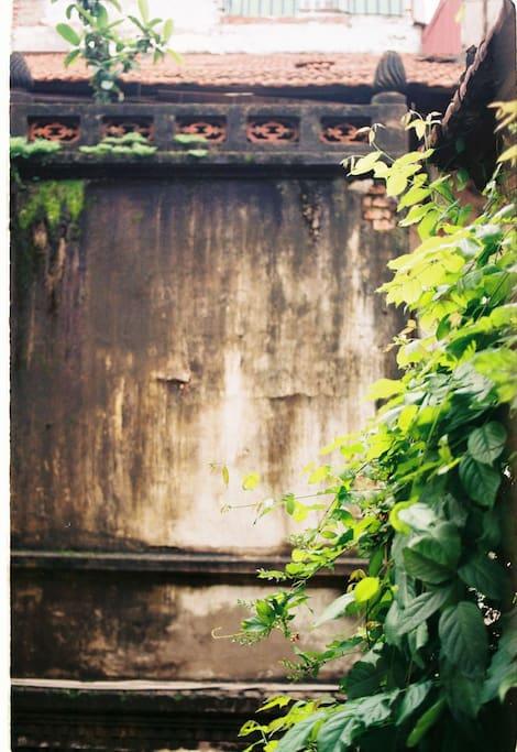 Original Ancient leafy view