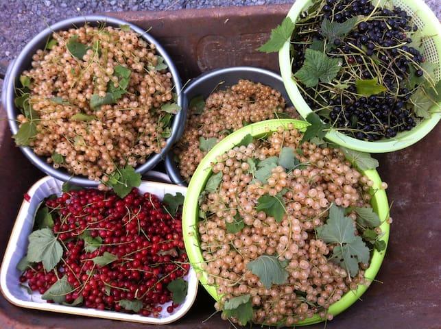 Fruit uit eigen tuin, verwerkt tot taart, smoothie of desserts voor gasten