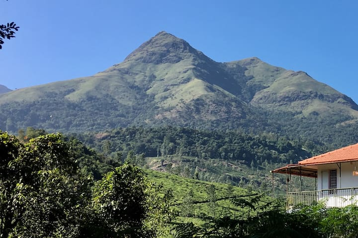 View of Chembra peak  as you enter the Jackfruit Tree's premises!