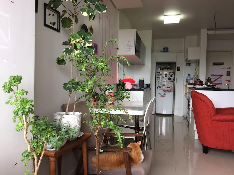 sala&cozinha com ilha
