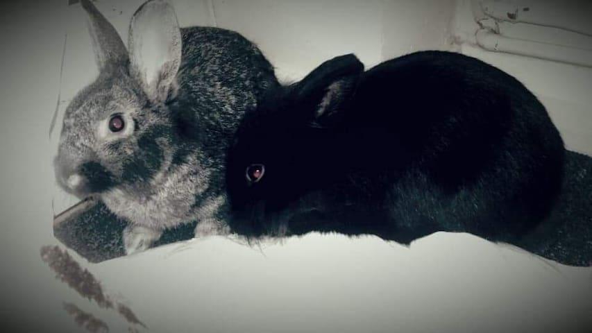 Our Rabbits Gizmo&Chilli ♡