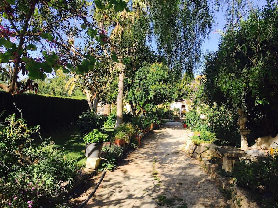 Nuestro precioso jardín.   Our amazing garden.
