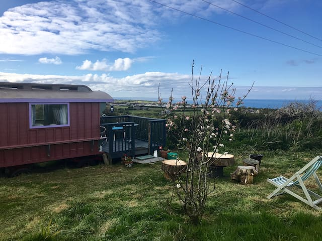 Deluxe Glamping - Shepherd Huts in St. Ives - Cornwall - Barraca