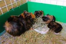家裡的可愛動物區住著我們的小小家人,歡迎多多餵食~