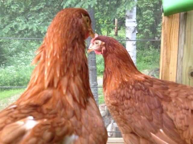 Mini farm for you! - Sainte-Marguerite-du-Lac-Masson - Huis
