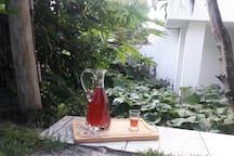Licor de Jaboticaba da Fruta colhida no quintal da casa!