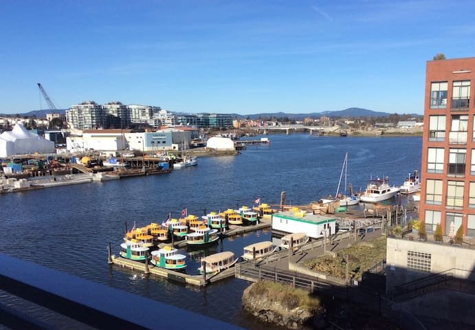 Waterfront, brand new studio in downtown Victoria. - Victoria - Apartment