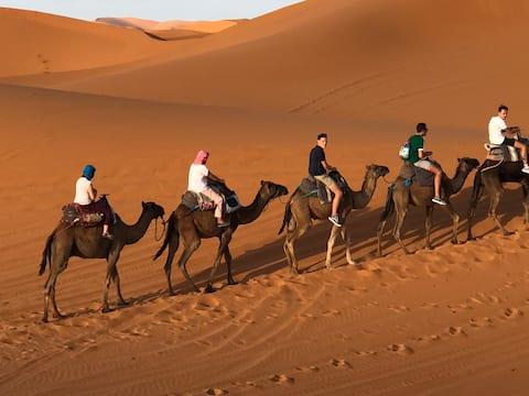 camp sahara camel tours