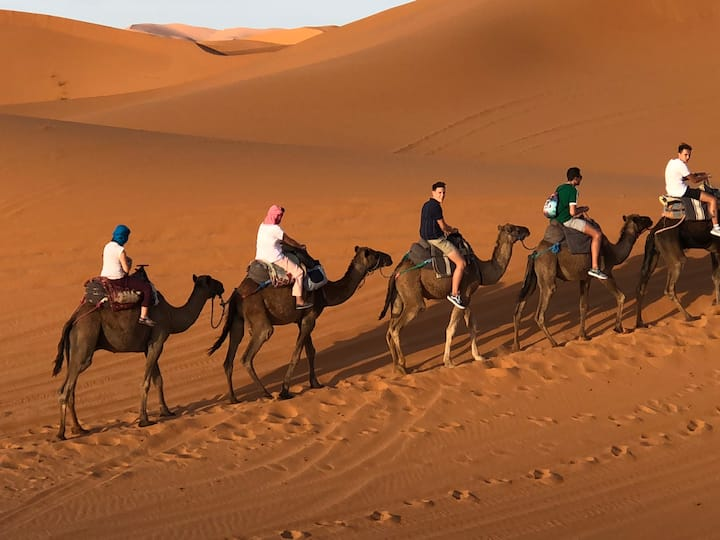 camp sahara camel tours