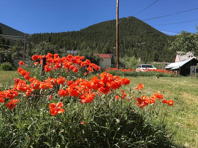 View to the south, poppies (mid June) Parking in area of the white car as seen.