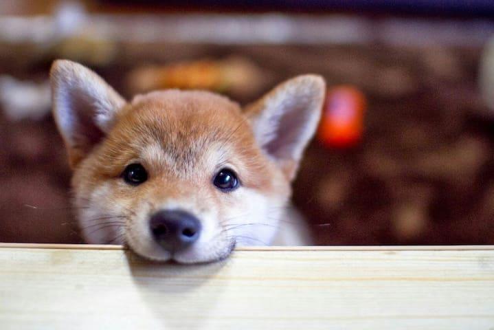 TEST TEST Fake Puppy TEST TEST TEST - Jordan Valley - Apartamento