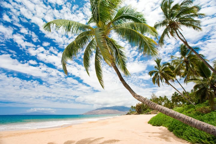 OCEANFRONT*Deluxe Ocean View Sugar Beach Condo