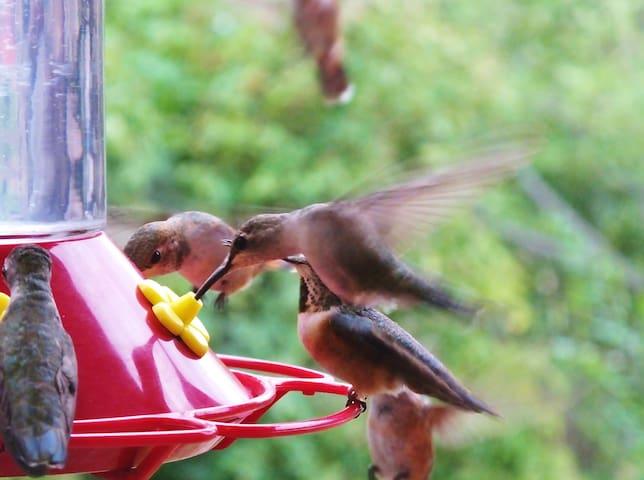 Hummingbird Haven/Casita Colibri