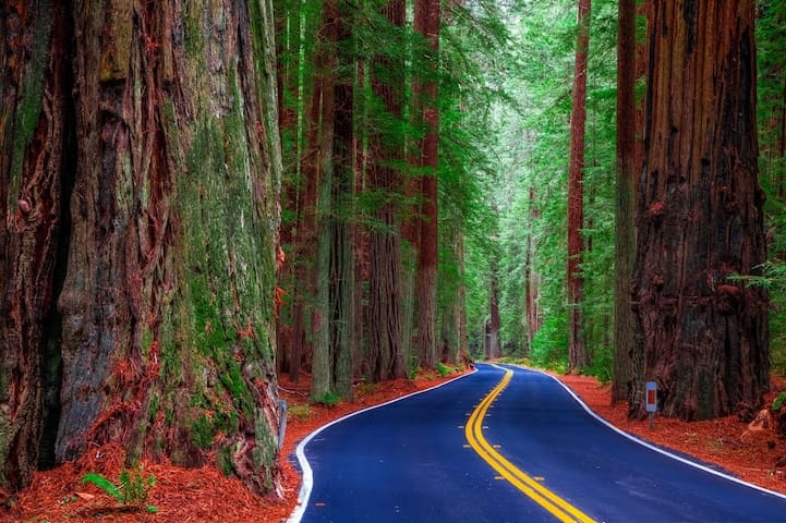 "Only 5 minutes from the ""AVENUE OF THE GIANTS"""