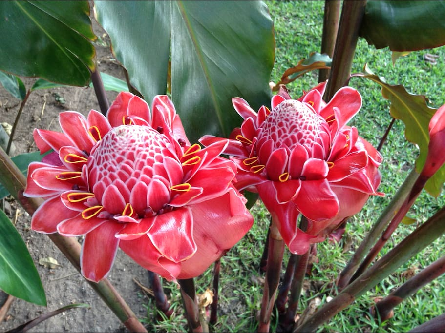 Relax in the garden surrounded by beautiful exotic flowers