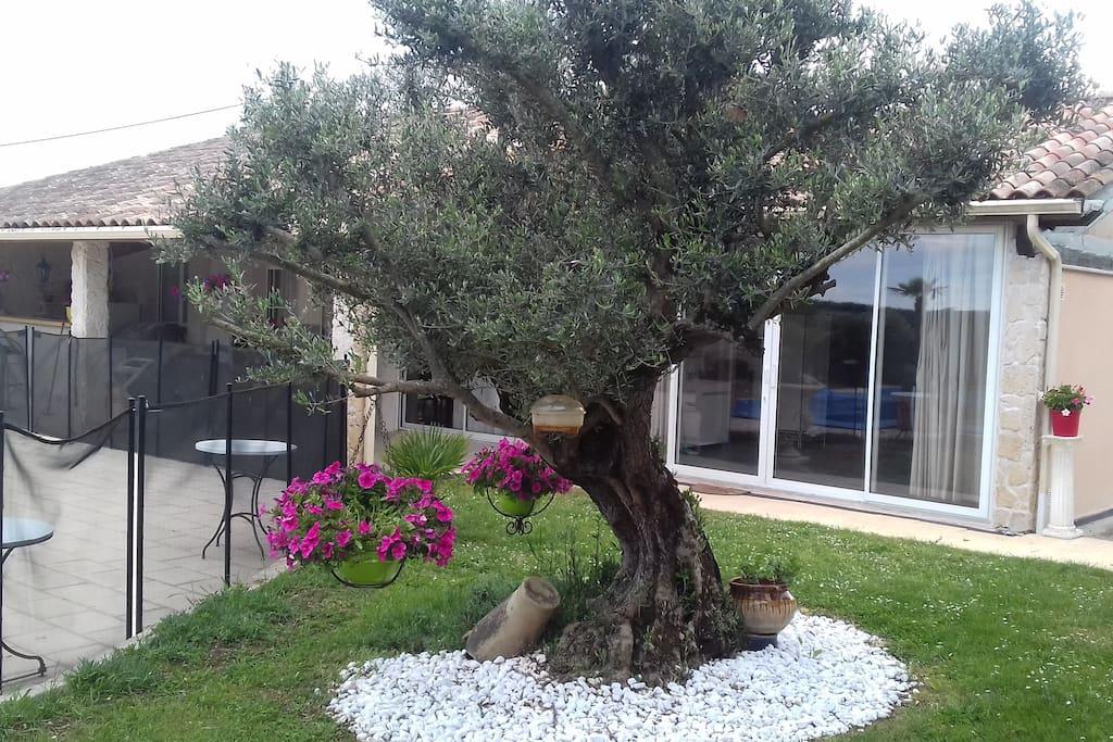 Notre bel olivier