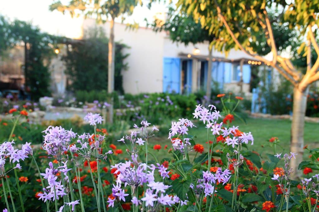 Jardín y loft