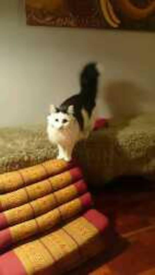 The cat mom Sakura.