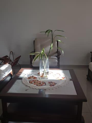 Hay plantas naturales de interiores que adornan y purifican el ambiente