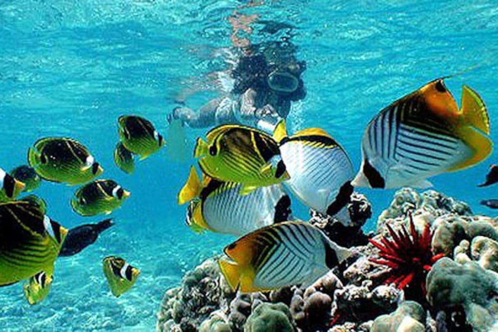 Close to wonderful snorkeling spots
