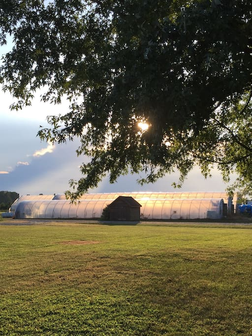 Farmhouse is set on a farm with greenhouses, beautiful sunsets, starry skies, and plenty of open space.