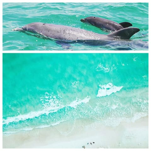 Watch Dolphins play from the Balcony