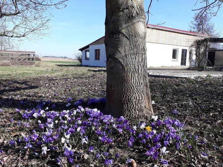 Ruhe und Abgeschiedenheit im Herzen der Uckermark