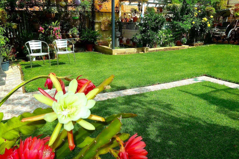 The backyard garden,