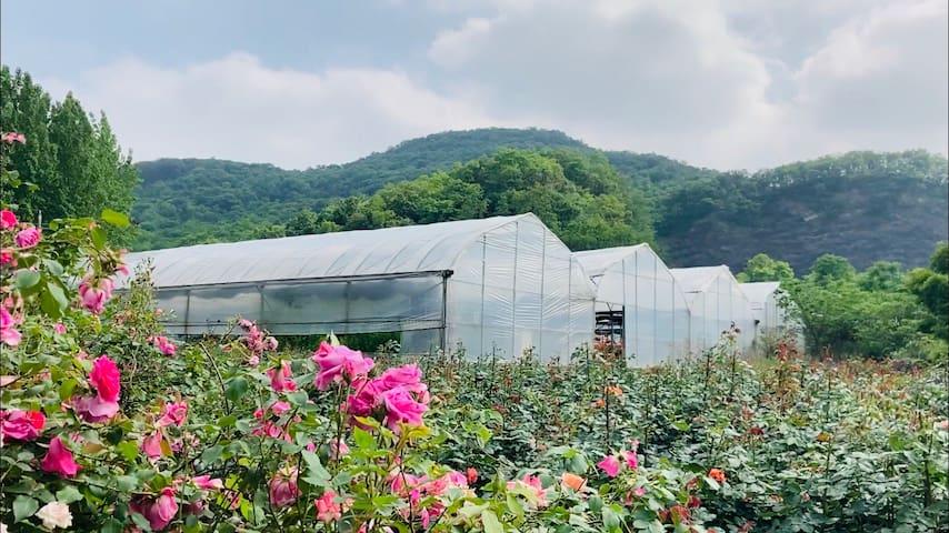 琵琶方山小院