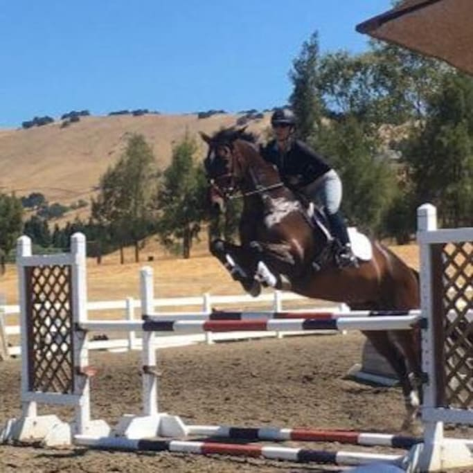 Catch the horse show below.
