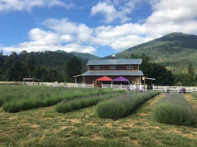 Lavender Fields Riverfront