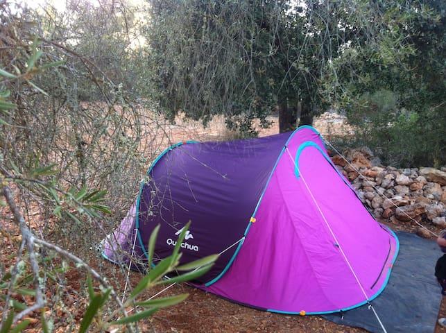 Expérience Nature Cigalle - Algaida - Tenda