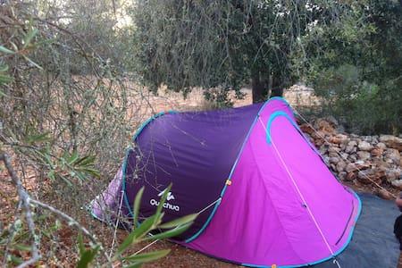 Expérience Nature Cigalle - Algaida - Tält