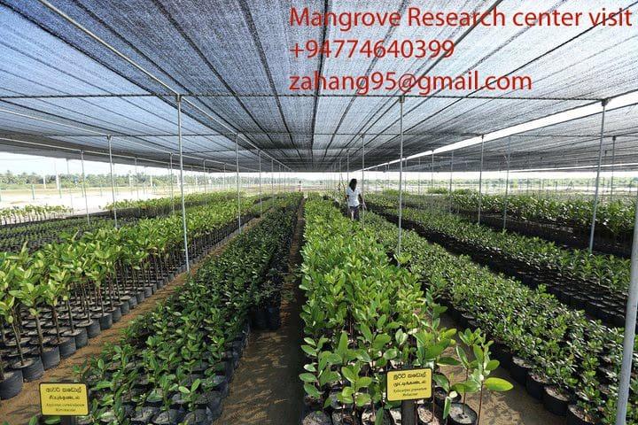 Mangrov e research centre trip