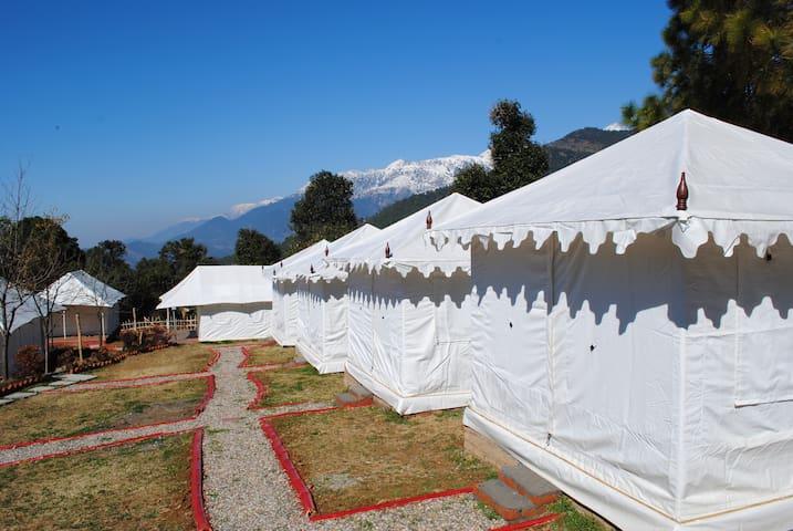 Luxury Camping in Bir Billing