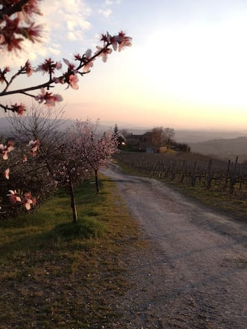 In the heart of a Chianti vineyard - Castellina in Chianti - House