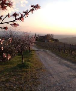 In the heart of a Chianti vineyard - Castellina in Chianti