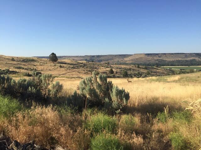 Beautiful view across field at Laila's Organic Farm.