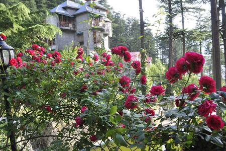 Heritage stay to get unmatched experience - Manali - Boutique hotel