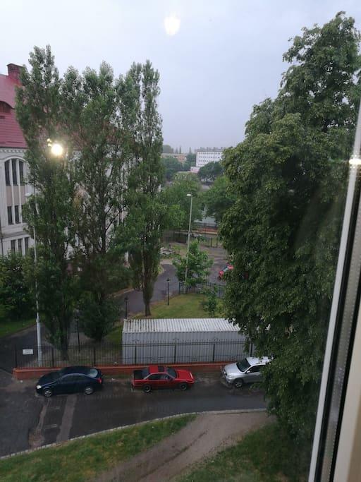 Вид из окна на королевский пруд