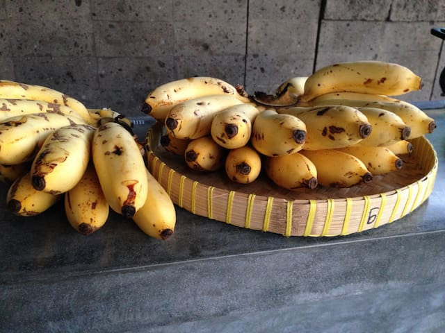 Bananas harvested from the grounds.