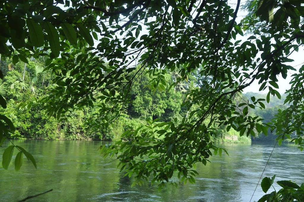 Serene Thodupuzha river bordering property