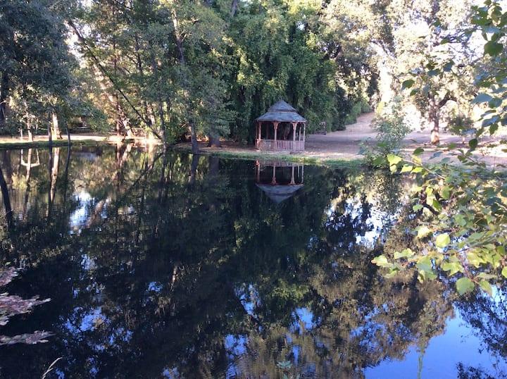 Waterfront-Studio-Creek-Trout Pond-Swimming Pool