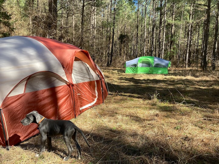Peaceful Pines Camping - Your Reserved Pine Forest