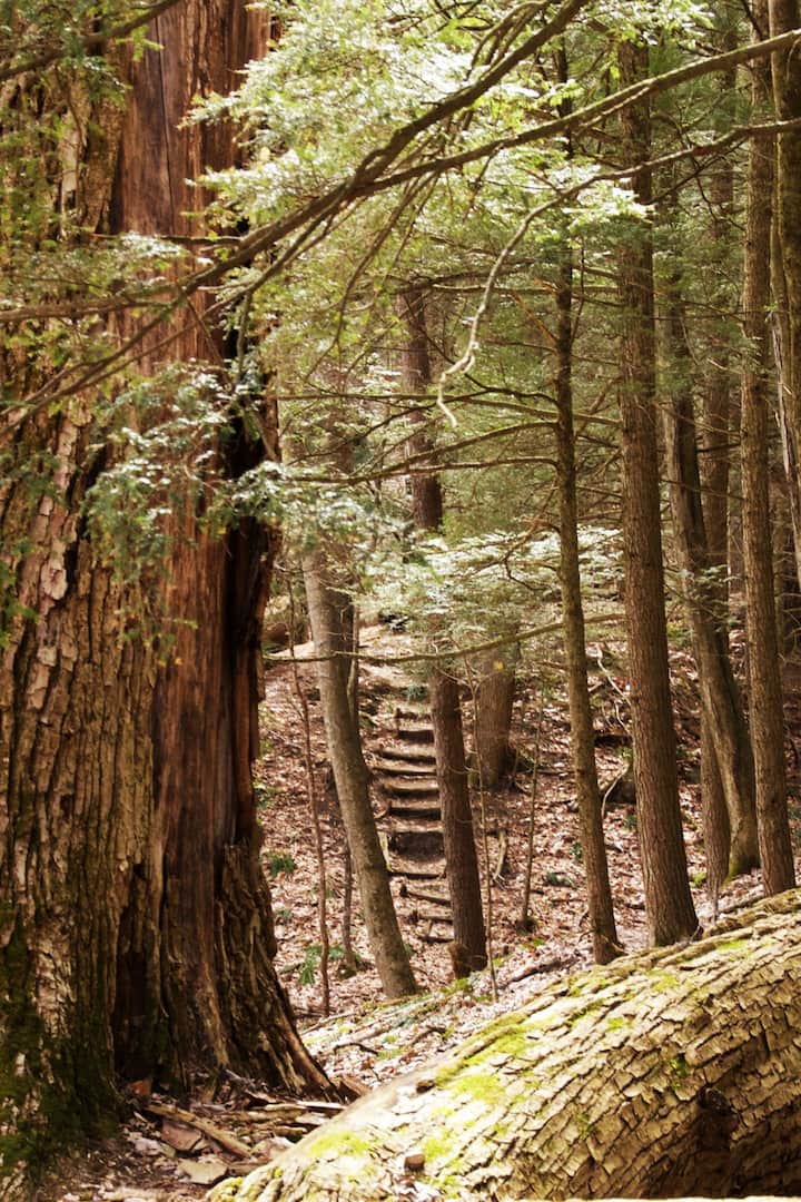 Breathe with Ancient Trees Mindfully