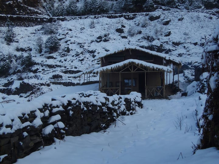 Rhododendron forest- Mud Hut @ Chopta :)