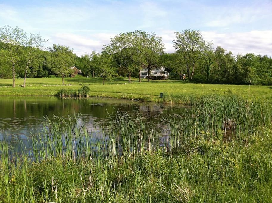 17 Acres - view from pond of house and barn