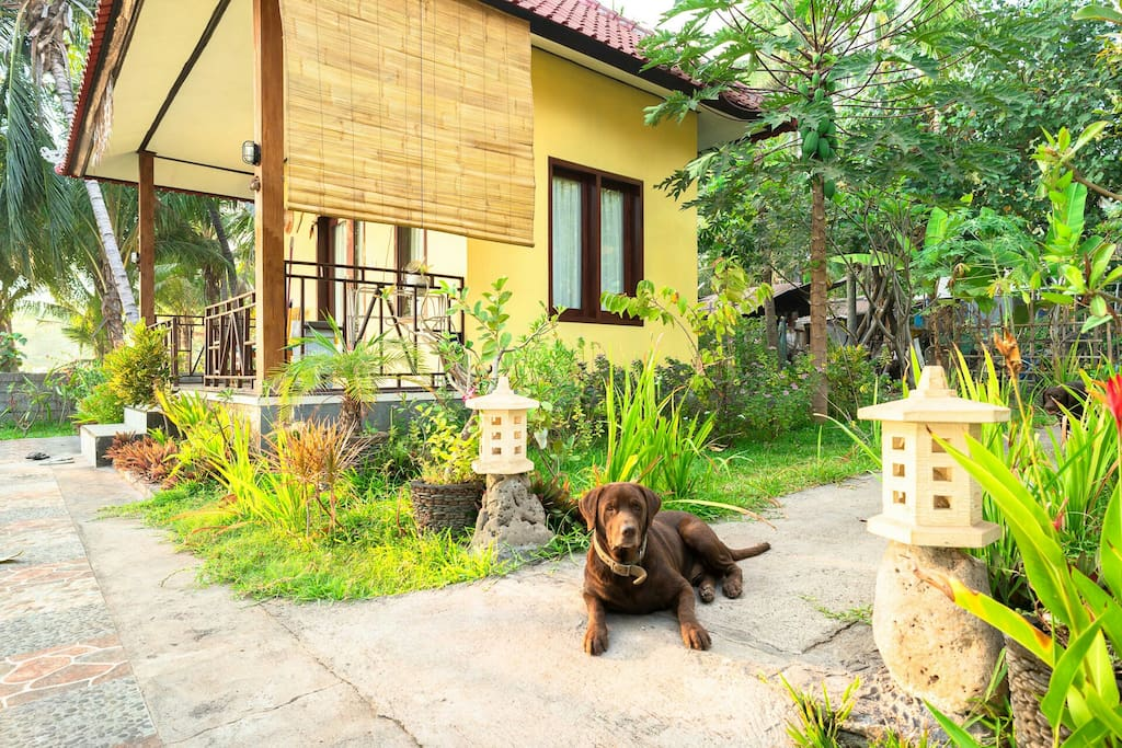 Rusty posing next to the homestay