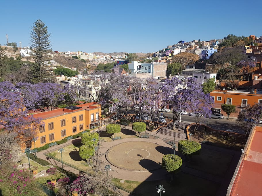 View to the blooming jacaranda trees from the livingroom