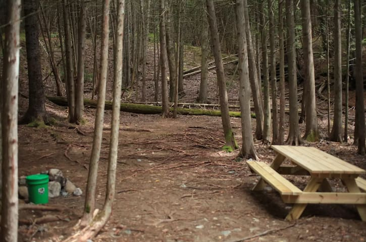 Acadia East Campground - Wonderland Campsite
